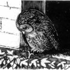 Moping Owl: Nem Con