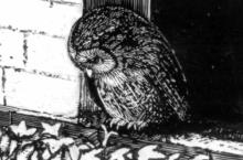 Moping Owl: MOTD