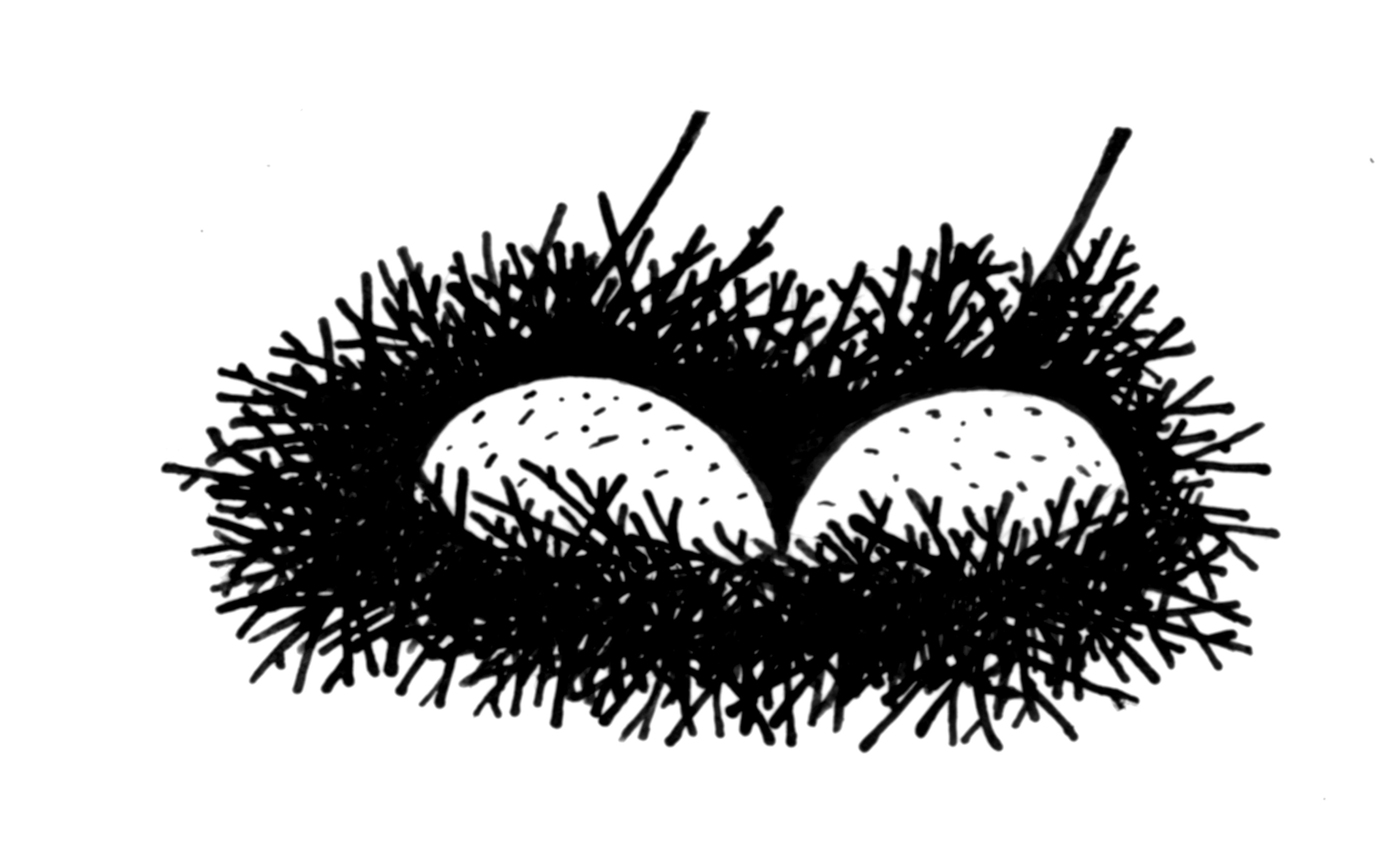 artbollocksnest
